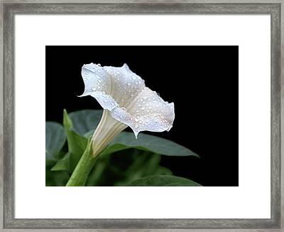 Moonflower - Rain Drops Framed Print