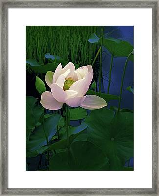 Moonglow   Framed Print