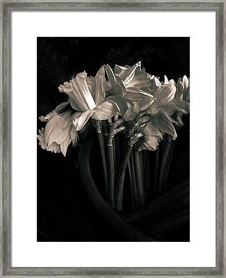 Moonlight And Daffodils Framed Print by Jessica Jenney