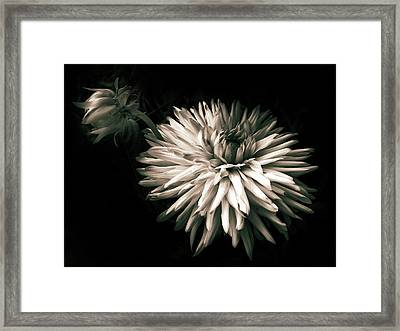 Moonlight And Dahlia Framed Print