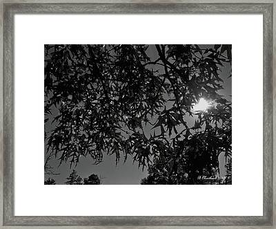 Framed Print featuring the photograph Moonlight by Betty Northcutt