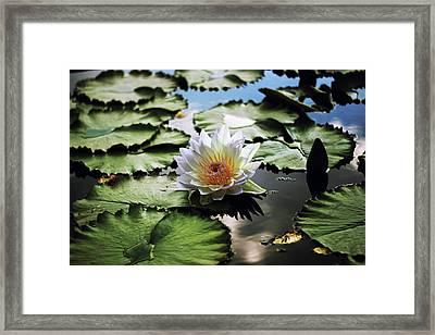 Moonlight Lily  Framed Print by Jessica Jenney