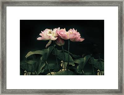 Moonlight Lotus Framed Print