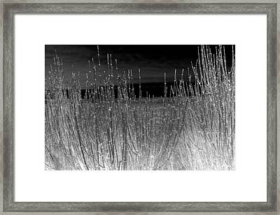 Moonlight On The Marsh Framed Print