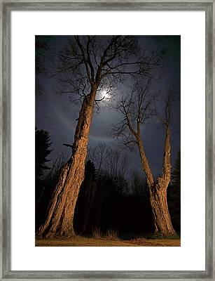 Moonlight Sentinels Framed Print by Jerry LoFaro