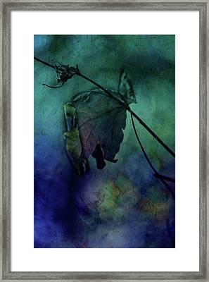 Moonlight Serenade Framed Print by Bonnie Bruno