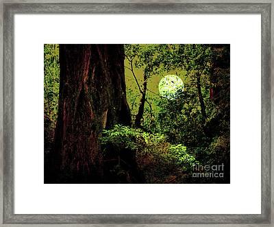 Moonlight Through The Old Redwood Forest . 7d5443 Framed Print