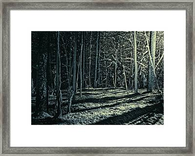 Moonlight Through The Trees Framed Print by Bob Orsillo