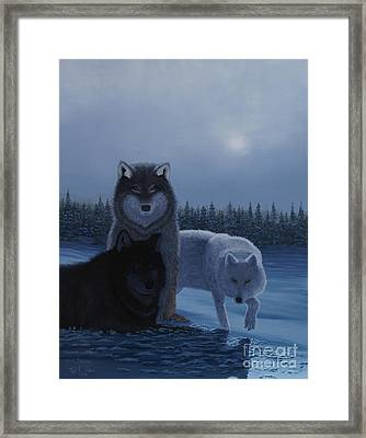 Moonlight Wolves Framed Print by Stanza Widen