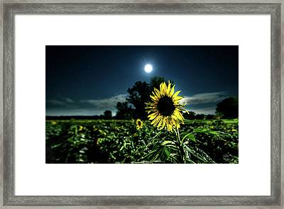 Framed Print featuring the photograph Moonlighting Sunflower by Everet Regal