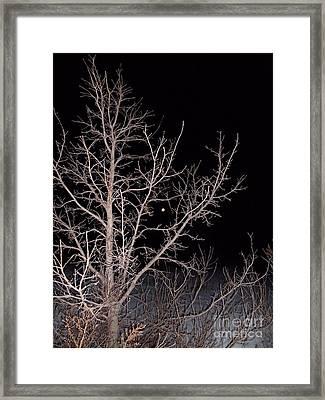 Moonlimbs Framed Print