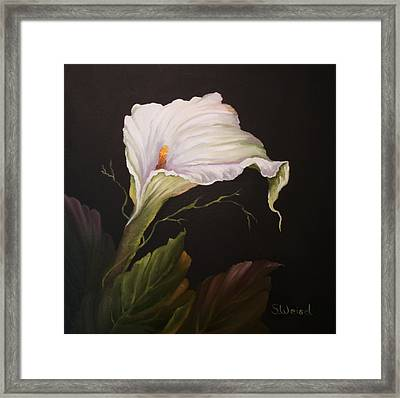 Moonlit Calla Lily Framed Print by Sherry Winkler