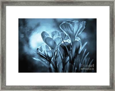 Moonlit Crocus Framed Print