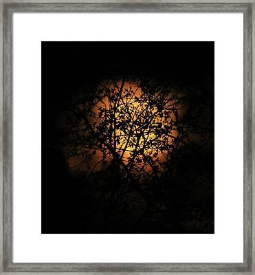Moonlit Leaves Framed Print by Dan Sproul