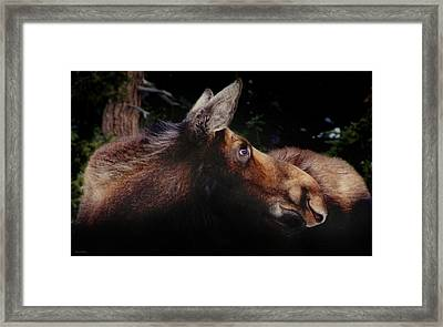 Moonlit Moose Framed Print by Brian Gustafson