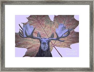 Framed Print featuring the photograph Moonlit Moose by Ray Shiu