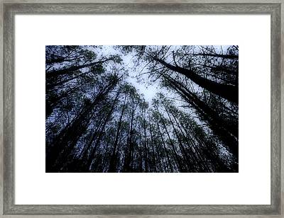 Moonlite Forest Framed Print by M K  Miller