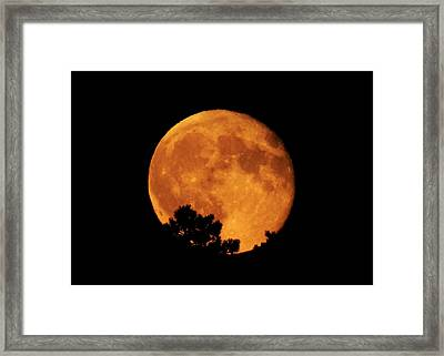 Moonrise Over Pines Framed Print by Dawn Key