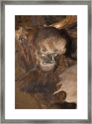 Moos Er Framed Print