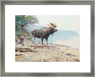 Moose At Lake Mcdonald Framed Print by Celestial Images