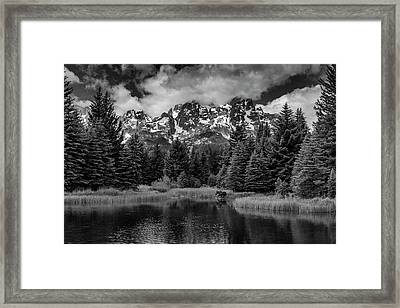 Moose At Schwabacher's Landing Framed Print