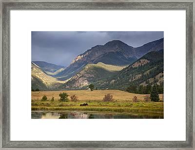 Moose At Sheep's Lakes Framed Print