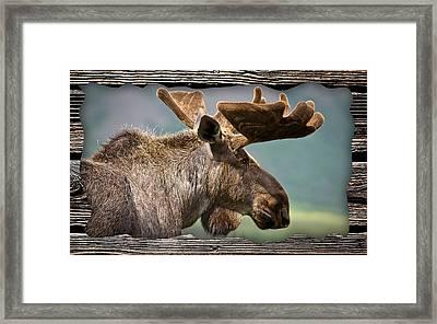 Moose Collection Framed Print