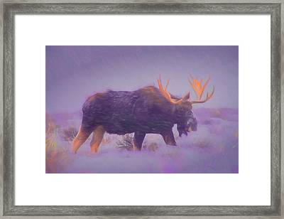 Moose In A Blizzard Framed Print