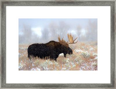Framed Print featuring the photograph Moose In The Fog Silhouette by Adam Jewell