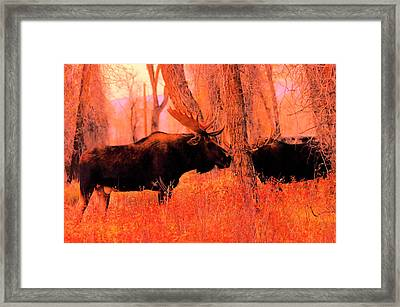 Moose In The Forest Framed Print by Jeff Swan