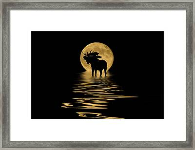 Moose In The Moonlight Framed Print
