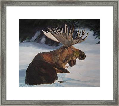 Moose In Winter Framed Print by Susan Tilley