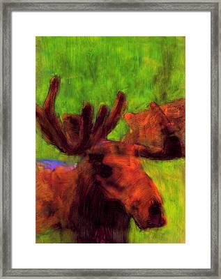 Moose Moments Framed Print