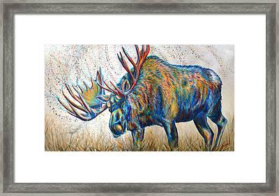 Moose Rut Framed Print