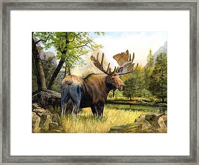 Moose Study Framed Print by Robert May