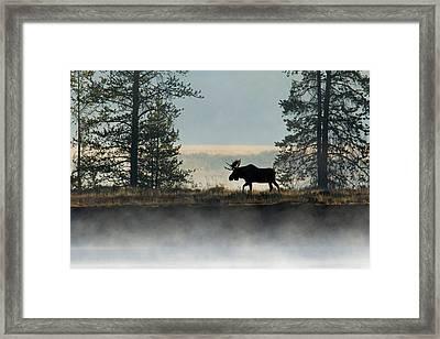 Moose Surprise Framed Print