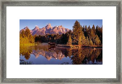 Moose Tetons Framed Print