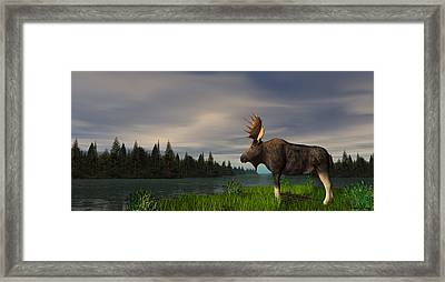 Moose Framed Print by Walter Colvin