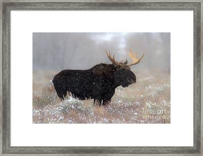 Framed Print featuring the photograph Moose Winter Silhouette by Adam Jewell