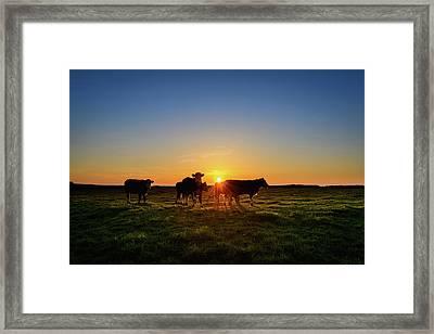 Moo'set Framed Print