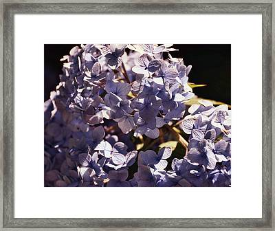 Mopheads Framed Print by JAMART Photography