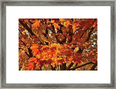 Framed Print featuring the photograph Moraine Hills Sugar Maple by Ray Mathis