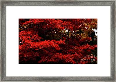 More About Maple Framed Print