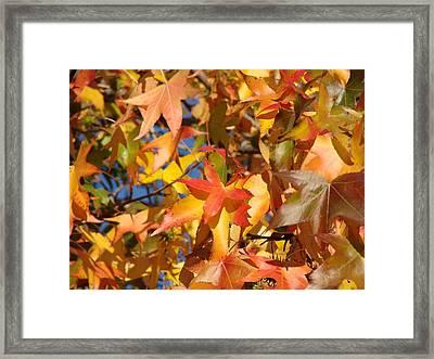 More Autum Leaves Framed Print by Liz Vernand