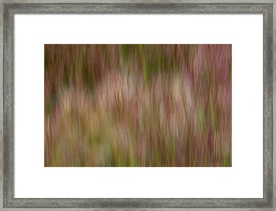 More Lake Grasses Framed Print