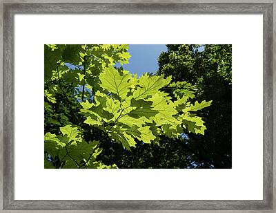 More Than Fifty Shades Of Green - Sunlit Oak And Linden Patterns - Up Left Framed Print by Georgia Mizuleva