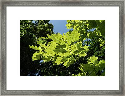 More Than Fifty Shades Of Green - Sunlit Oak And Linden Patterns - Up Right Framed Print by Georgia Mizuleva