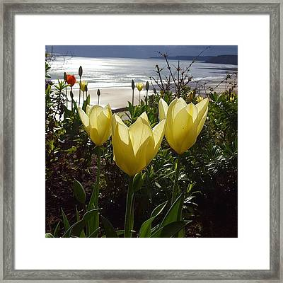 More Tulips At The #seaside Framed Print by Dante Harker