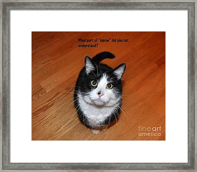 More Words From  Teddy The Ninja Cat Framed Print by Reb Frost