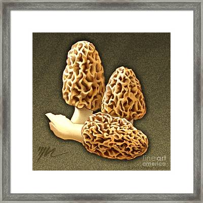 Morel Mushrooms Framed Print